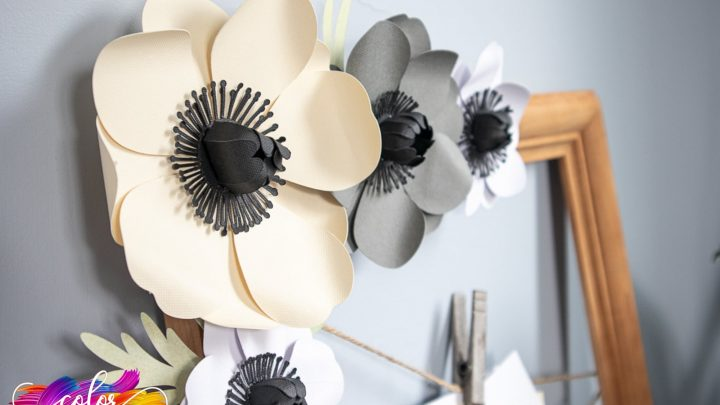 Anemone Photo Display With The Cricut