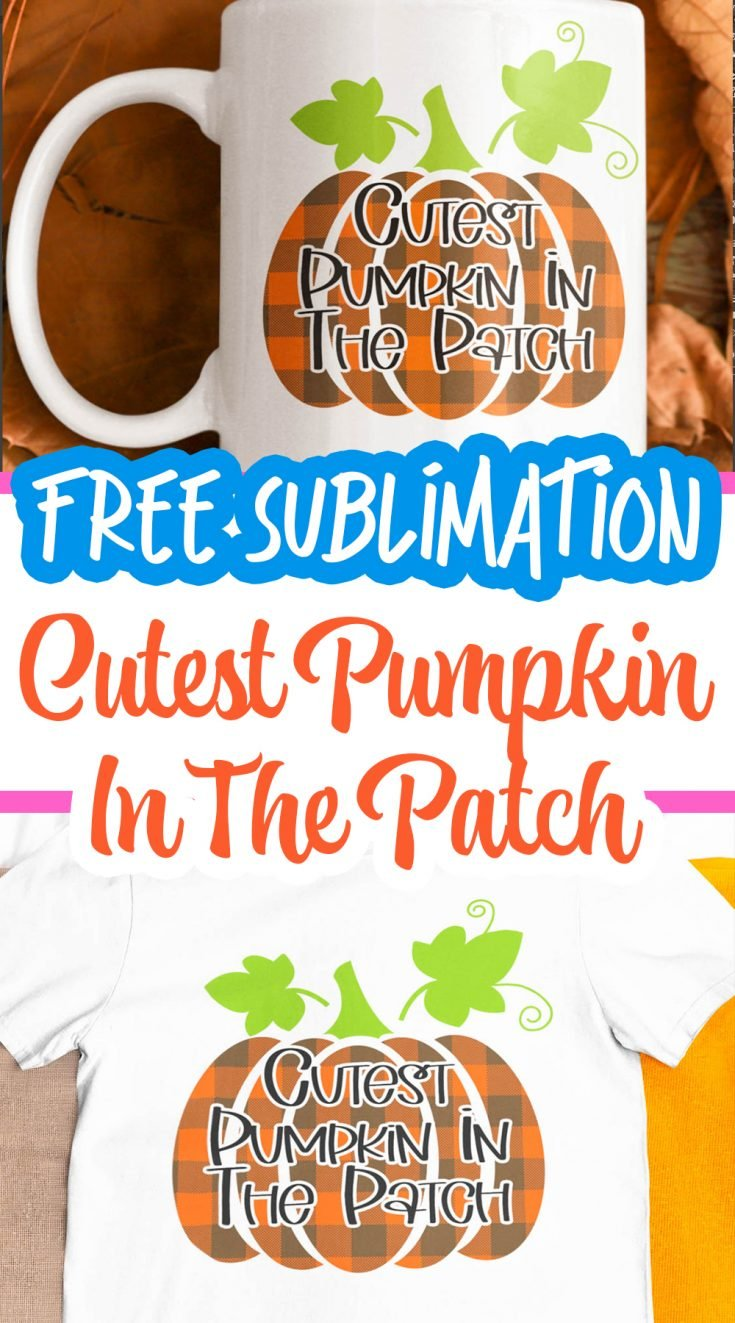 cutest pumpkin in the patch pin image
